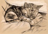 cat8(s).jpg