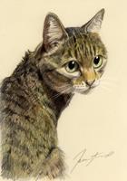 cat9(s).jpg